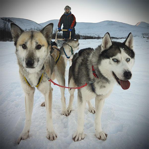 Exclusive Dog Sledding